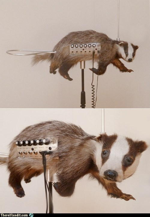 badger,Badgermin,g rated,Hall of Fame,taxidermy,there I fixed it,theremin