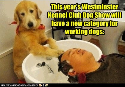 This year's Westminster Kennel Club Dog Show