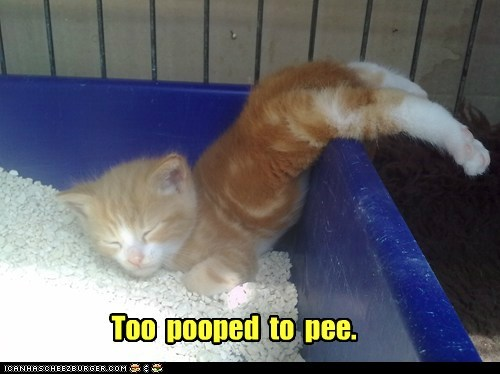 Too  pooped