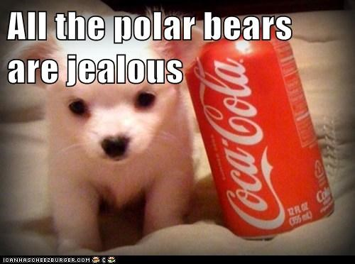 All the polar bears are jealous