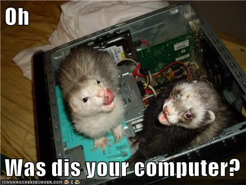 computer,ferret,ferrets,mine,mine now,technology
