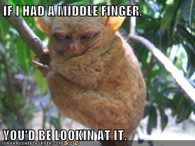angry,flipping bird,flipping the bird,go away,irritated,mad,middle finger,monkey,tarsier