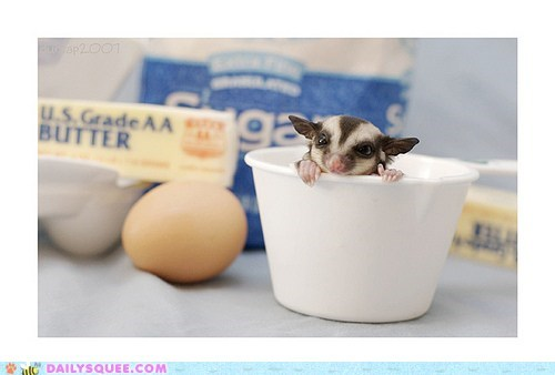 Daily Squee: One Cup Sugar Glider