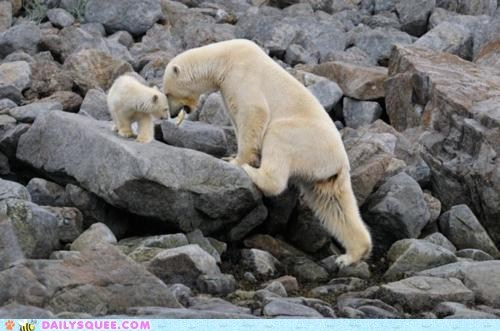 Daily Squee: Happy International Polar Bear Day!