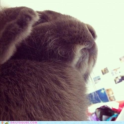 Bunday,bunny,disapproving,imposing,large