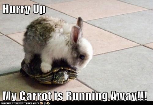 bunnies,carrot,hurry up,rabbit,running away,turtle