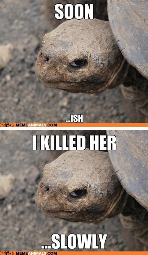 Animal Memes: Introducing Insanity Tortoise