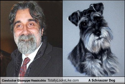 Conductor Giuseppe Vessicchio Totally Looks Like A Schnauzer Dog