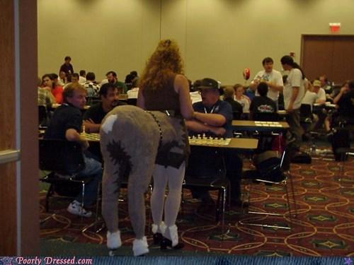 chess,horse,horses,tournament