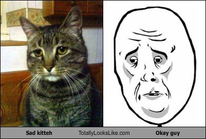 Sad kitteh Totally Looks Like Okay guy