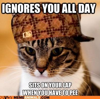 Cats,ignore,laps,Memes,pee,Scumbag Cat,scumbags,timing