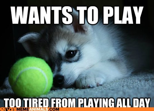 dogs,First World Problems,first world puppy problems,goggies,playing,puppies,tennis ball,tired