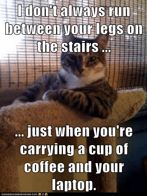 I don't always run between your legs on the stairs ...  ... just when you're carrying a cup of coffee and your laptop.