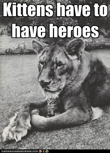 Kittens have to  have heroes