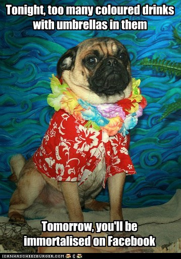 alcohol,best of the week,caption,clothes,clothing,dogs,drinking,drunk,facebook,hawaiian shirt,lei,Party,party time,pug,pugs