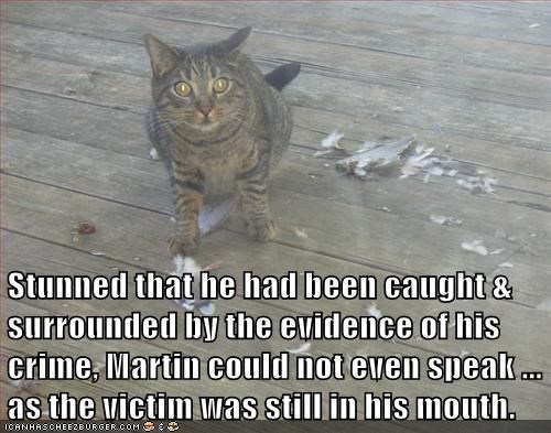 bird,caught,could not,crime,evidence,feathers,mouth,noms,reason,speak,stunned,surrounded,victim