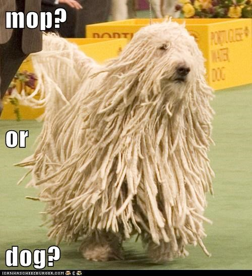 mop? or dog?