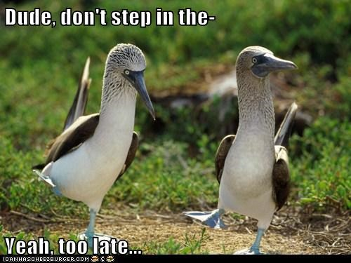blue-footed boobies,dude,gross,poop,stepped,too late