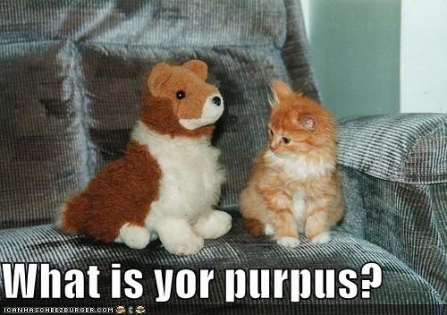 What is yor purpus?