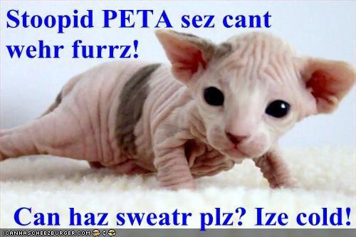 Stoopid PETA sez cant           wehr furrz!  Can haz sweatr plz? Ize cold!