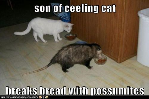 son of ceeling cat  breaks bread with possumites