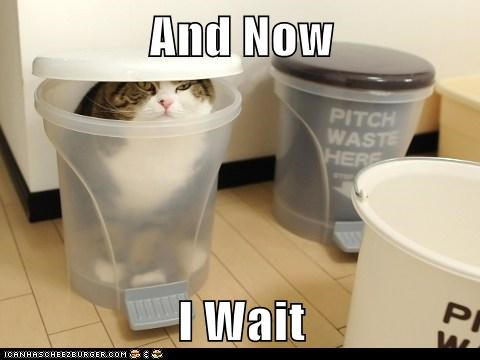 caption,Cats,maru,now,trashcan,wait,waiting