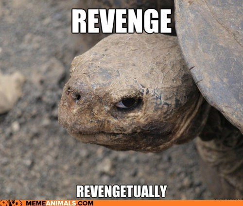 Animal Memes: Insanity Tortoise - He'll Get That Lame Pun Coon