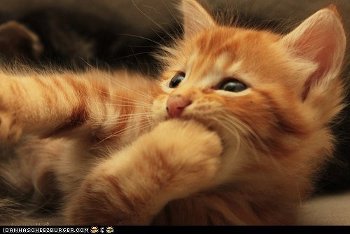 Cyoot Kitteh of teh Day: Paw-m Nom Nom