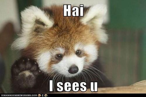 Hai  I sees u