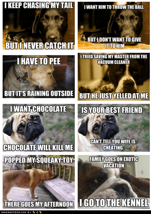 best of the week,complaining,dogs,First World Dog Problems,First World Problems,funny,meme,Memes,multipanel,whining
