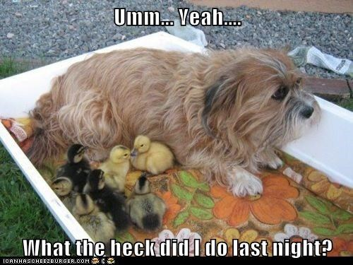 animals,best of the week,dogs,ducklings,funny,Hall of Fame,mixed breed,what breed