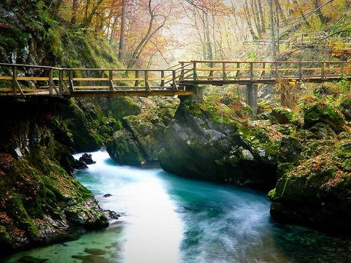 Forest Bridge, Bled, Slovenia