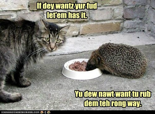 advice,food,hedgehog,noms,pun,rub,stealing,way,wrong