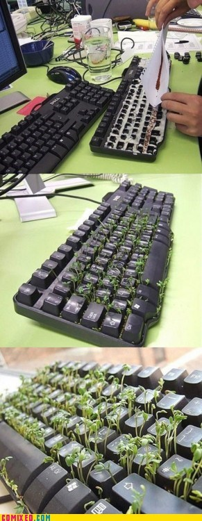 Growing,keyboard,plants,seeds,the internets