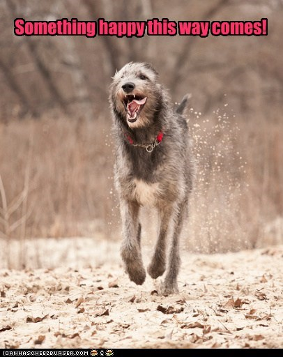 caption,dogs,funny,happy,irish wolfhound,lol,ray bradbury,something wicked,this way comes