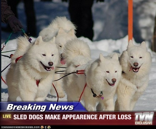 Breaking News - SLED DOGS MAKE APPEARENCE AFTER LOSS