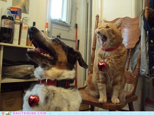 cat,dogs,pet,reader squees,sing,song