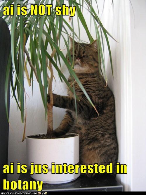Botany,excuse,im,interested,not,reason,shy,tree