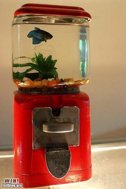 aquarium,candy,design,fish,pet