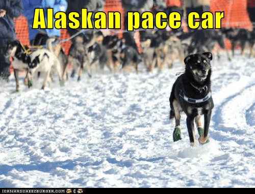 Iditarod 2012 Update: Day Six