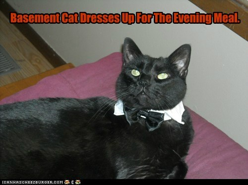 Basement Cat Dresses Up For The Evening Meal.