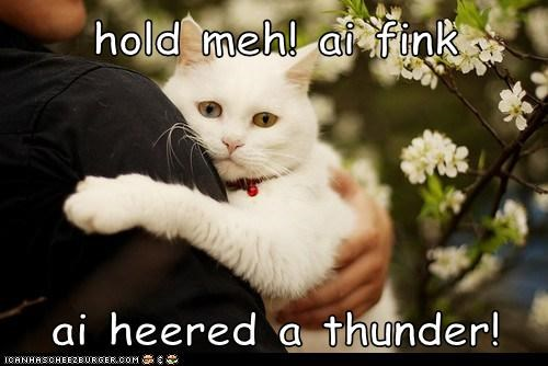 hold meh! ai fink  ai heered a thunder!