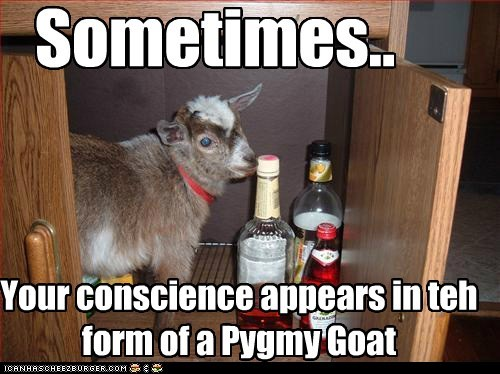 alcohol,booze,caption,conscience,drink,drinking,goat,goats,pygmy goat,small conscience