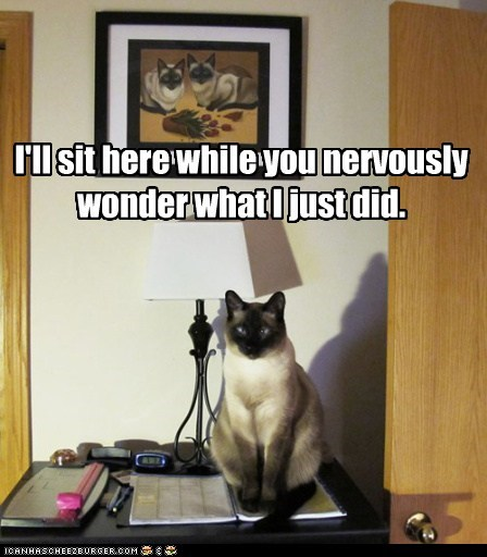 best of the week,Hall of Fame,here,mind game,nervously,psychology,siamese,sit,wonder