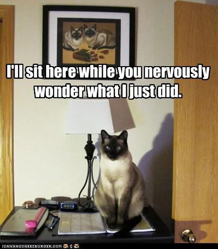 Feline Psy Ops.