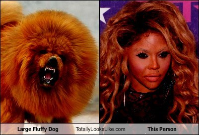 Large Fluffy Dog Totally Looks Like This Person
