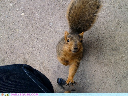 Reader Squees: Can I Haz Some?