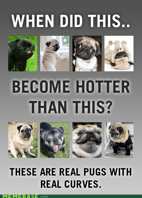 curves,dogs,hotter than this,How People View Me,pugs,puppies