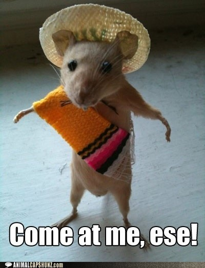big,caption,come at me bro,danger,fight,mexico,mouse,rats,spanish