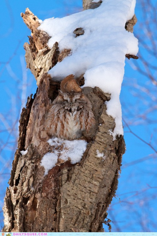 Owl, Where are You?